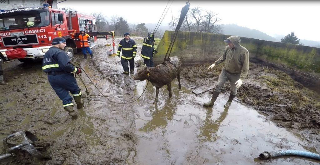 19.11.2016 – Reševanje živali