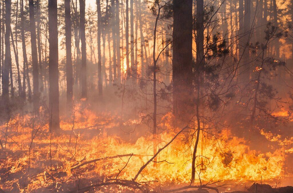 31.3.2017 – Razglašena velika požarna ogroženost naravnega okolja – PREKLIC 12.4.2017